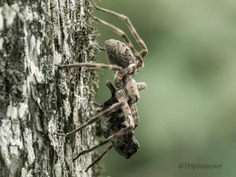 Fish Spider