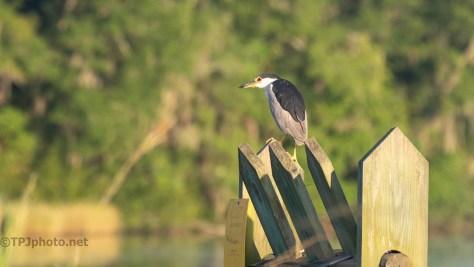 Night Heron On A Trunk
