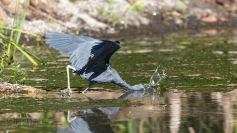 And He Missed, Heron