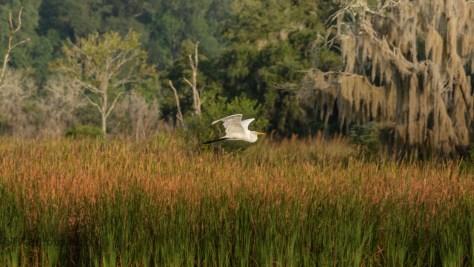 Marsh Fall Colors