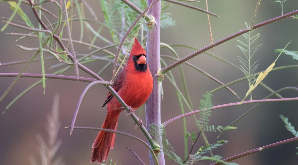 Unexpected Cardinal