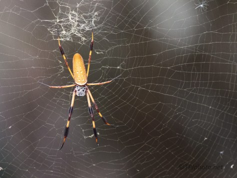 End Of The Orb Weavers