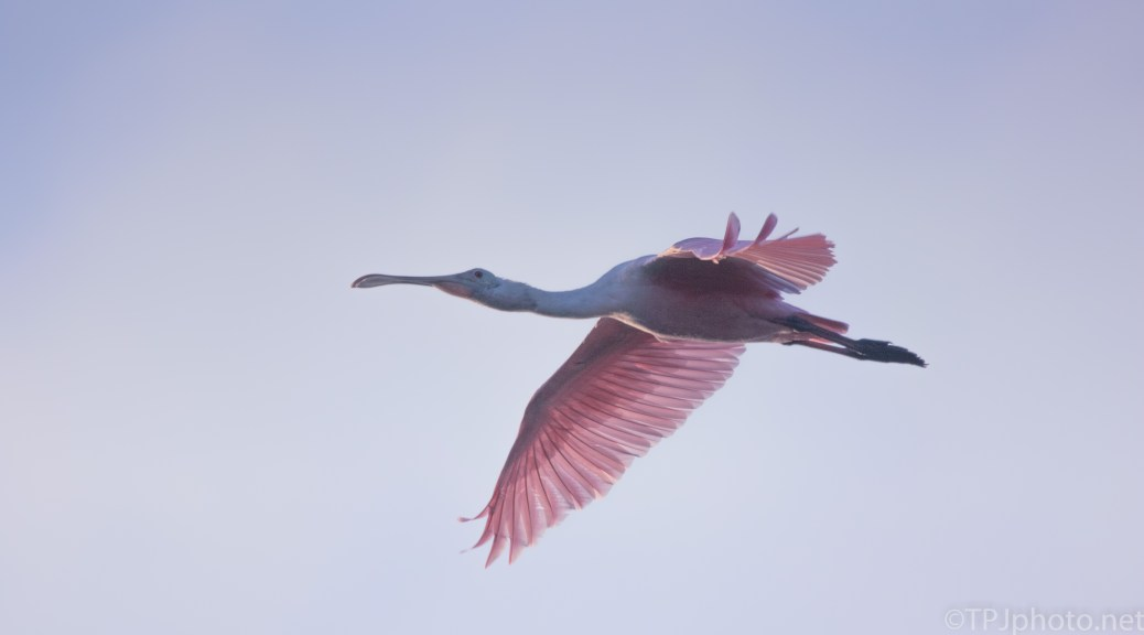 Close Encounter, The Pink Kind