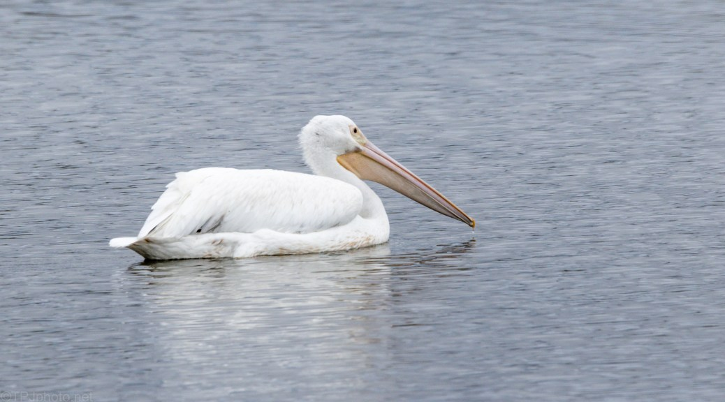 Waiting For The Others, Pelican
