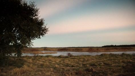 Dawn At A Marsh