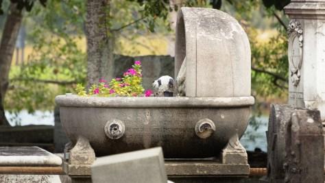 Little Panda, Charleston