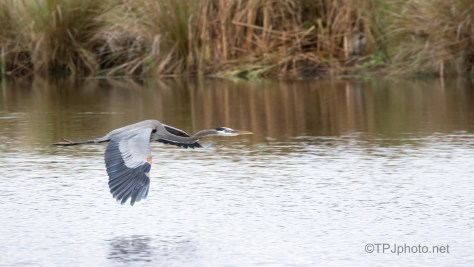 Straight Down The Middle, Heron