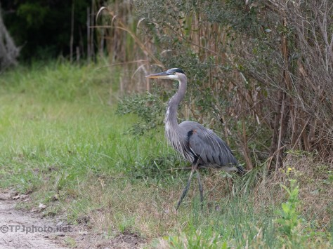 Over The Dike Road, Heron