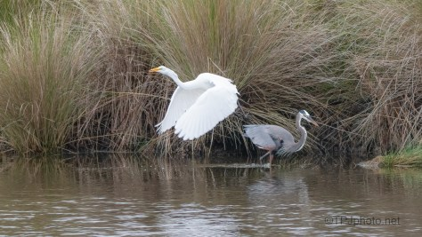 This Is My Spot, Heron vs Egret