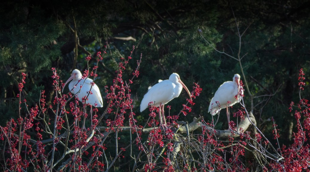 Red Blossoms And White Birds