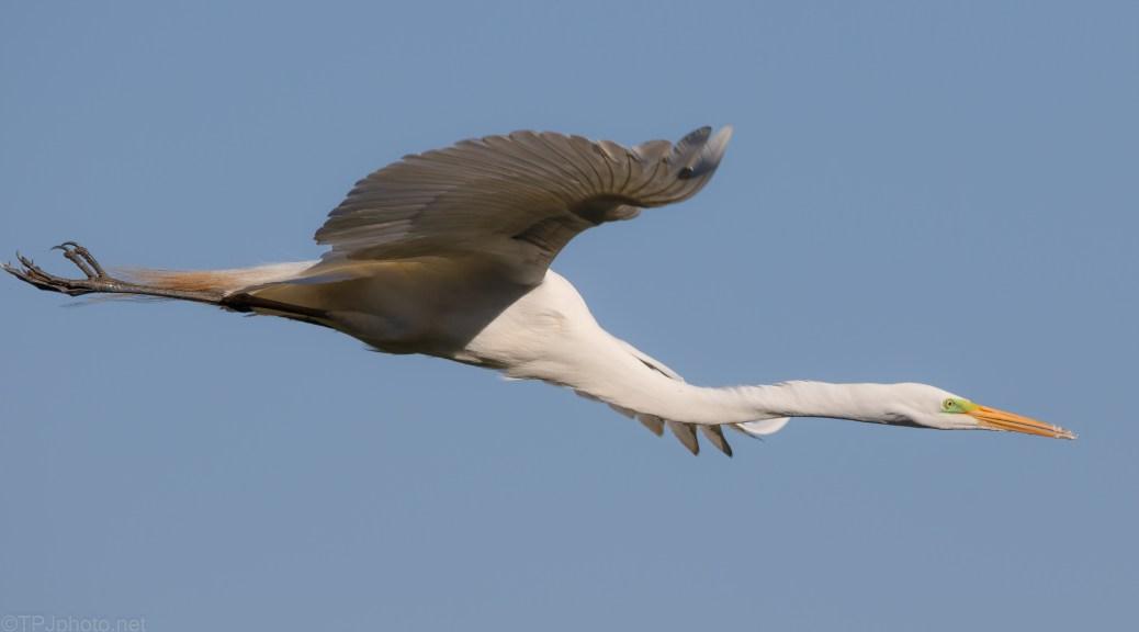 That's A Big Bird