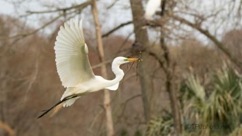 Through The Trees, Egret