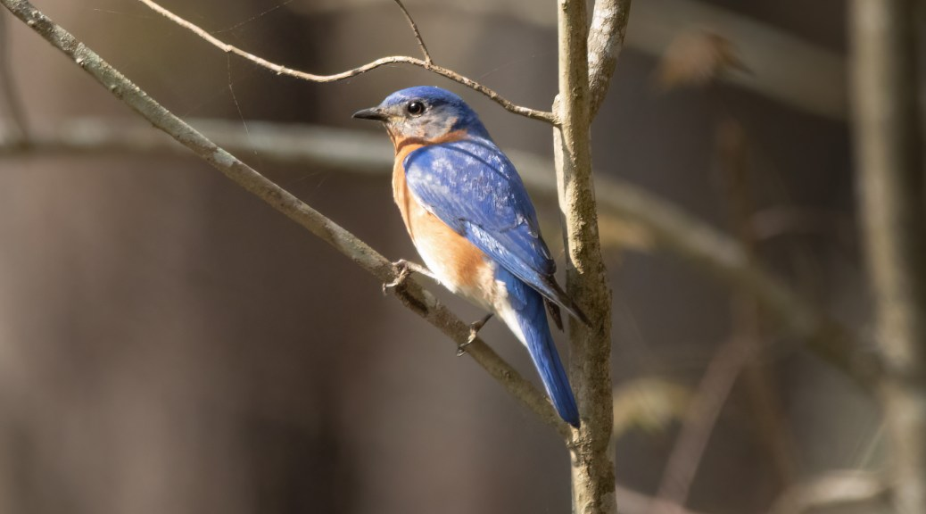 Another Small Bird, Just Blue