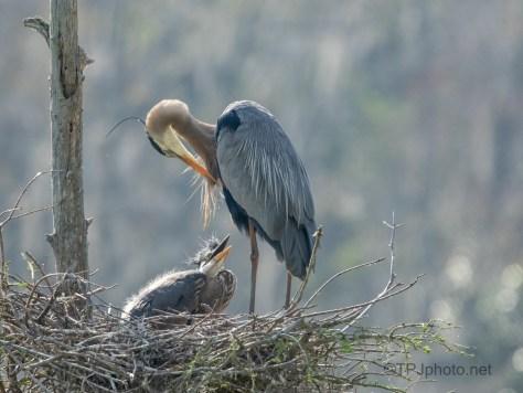 So, When Do We Eat ? Heron