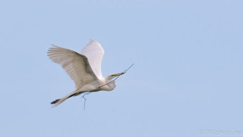 Blue Sky - White Bird, Egret