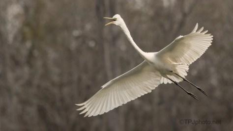 Announcing His Return, Egret