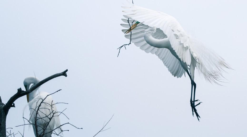 More Sticks Needed, Egret