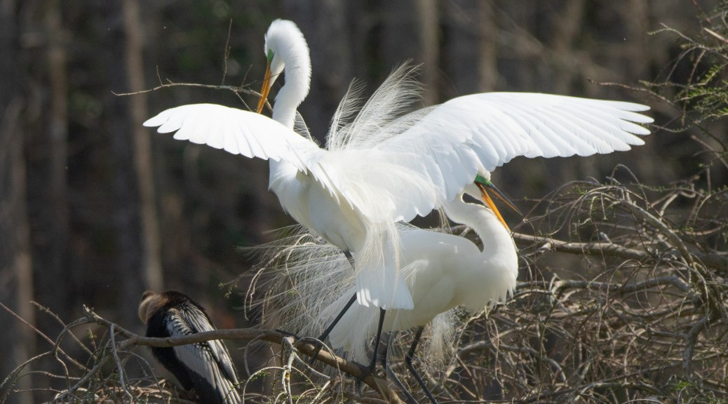 Another Grand Entrance, Egret