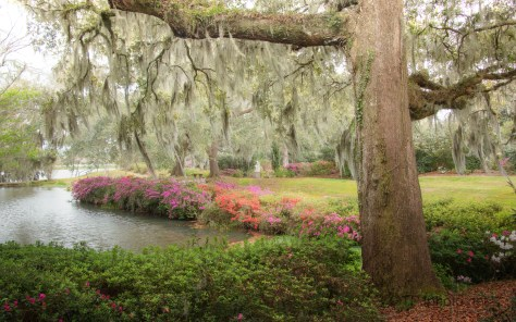 Garden By The Ashley, South Carolina
