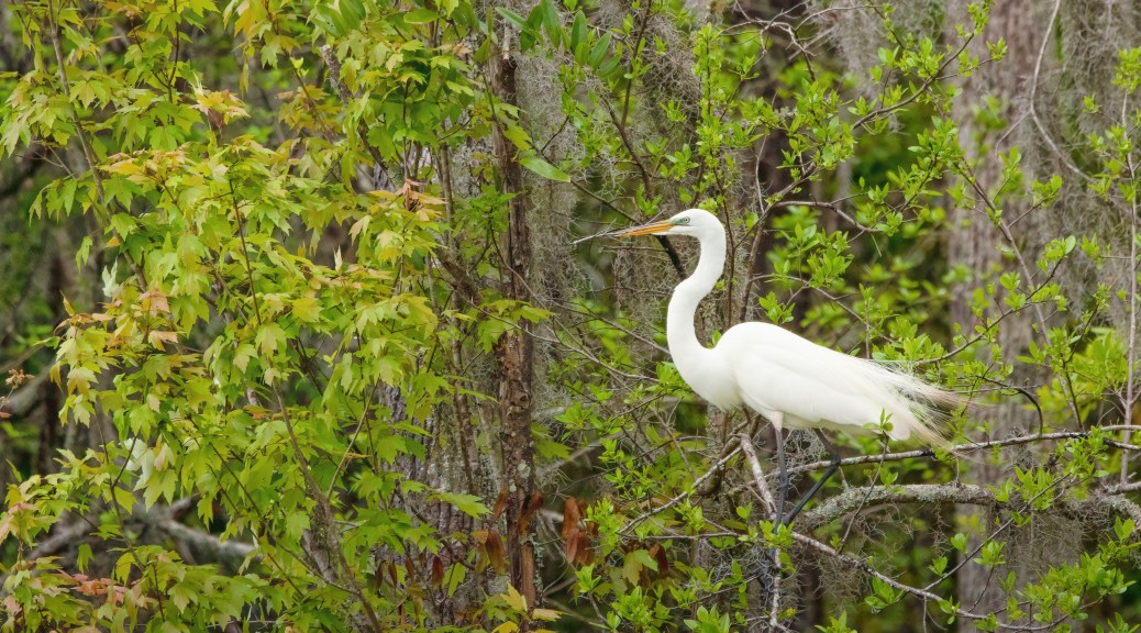 In A Lush Forest, Egret