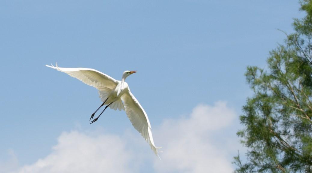 Egret Scene