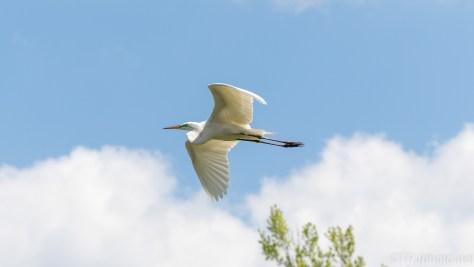 In A Circle, Egret