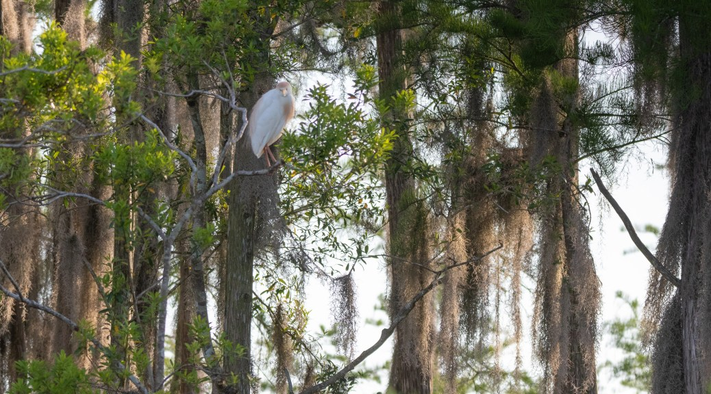 Being Watched, Heron / Egret