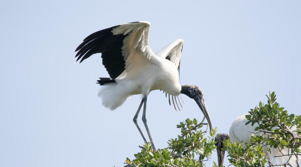 Followed The Path, Stork