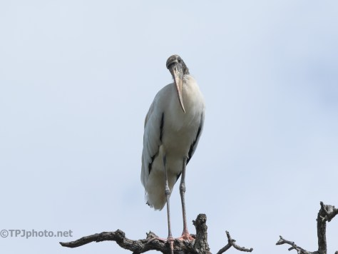 Sharing A Moment, Stork