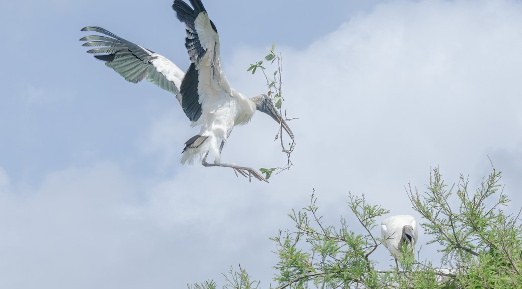 Gentle Giant Landing At A Nest
