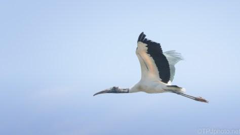 In Flight Stork