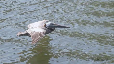 They Make It Look So Easy, Pelican