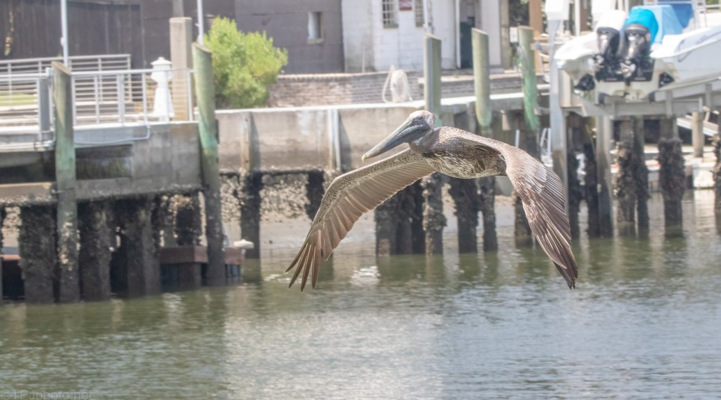 Down The Middle, Pelican