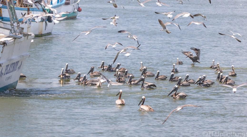 Pile Of Pelican