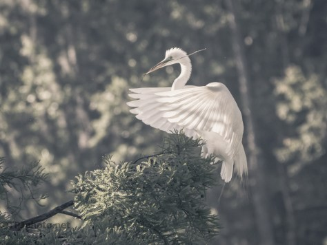 Egret, A Softer Look