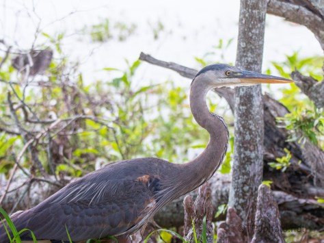 Walking Past Each Other, Heron