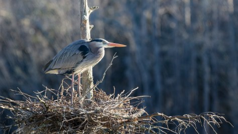 Lost And Found, Heron