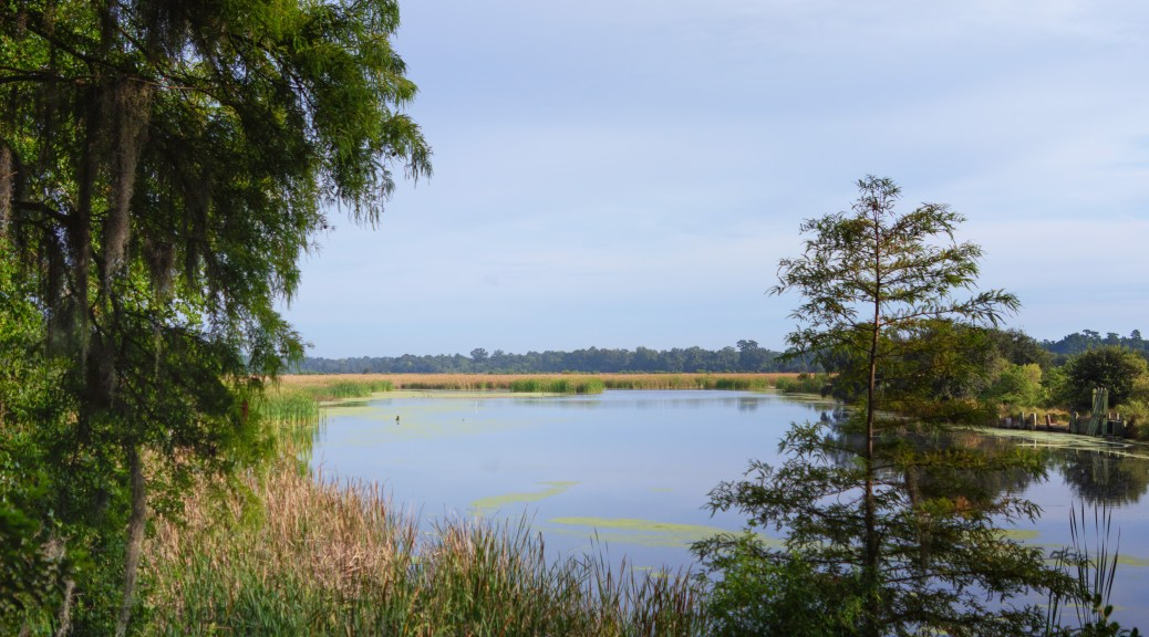 Looking Over A Marsh