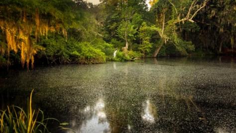 Back Pond, Magnolia Plantation
