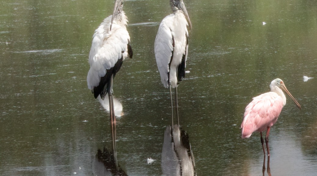 Storks And Spoony Posing