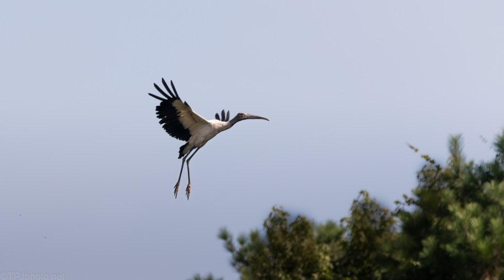 Stork Flight
