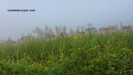 Udayagiri and Mysore 035