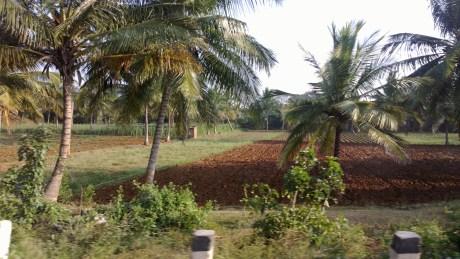 Udayagiri and Mysore 094