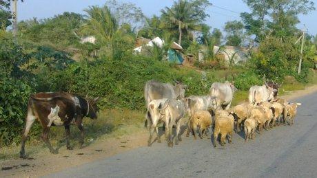 Udayagiri and Mysore 096