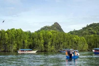 1. Take a boat tour through the mangroves