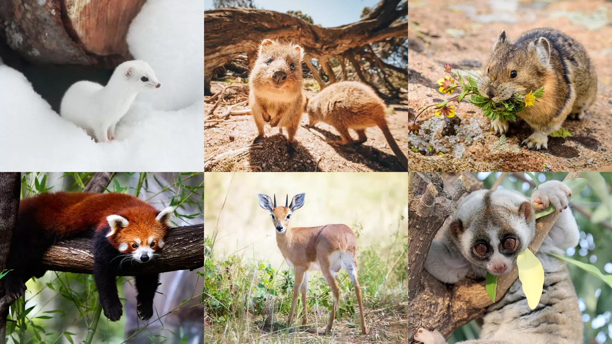 The Cutest Animals In The World That You Never Knew Existed Cn Traveller