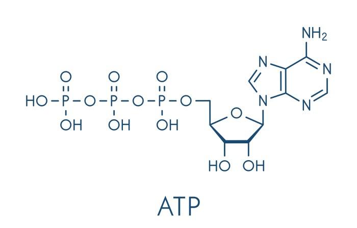 アデノシン三リン酸 構造