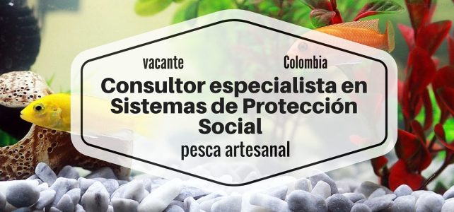 Consultor especialista en Sistemas de Protección Social para pesca artesanal con la FAO