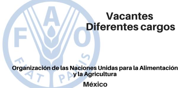 La FAO abre convoatoria laboral en México. Diversos cargos.