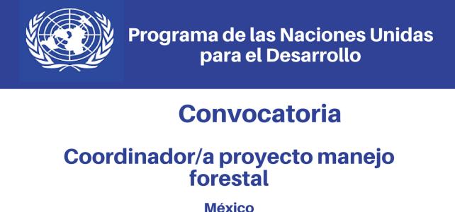 Convocatoria Coordinador/a de la Unidad Técnica Especializada – Proyecto Manejo Forestal PNUD